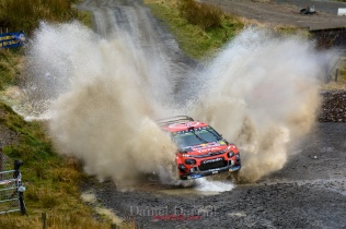 2019_Sweet lamb D2 Wales GB 16
