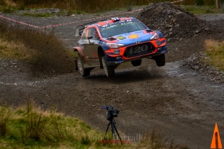2019_Sweet lamb D2 Wales GB 24